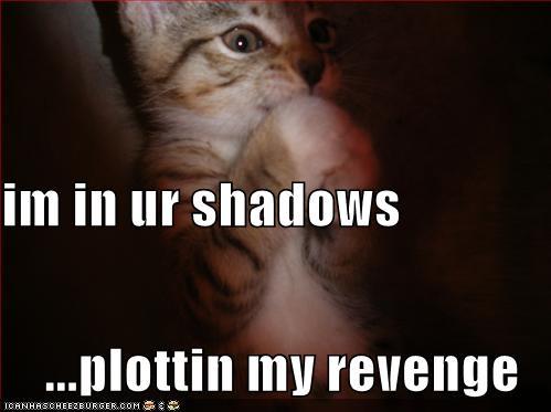 funny-pictures-kitten-plots-revenge.jpg
