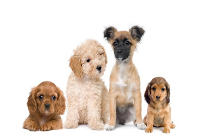 dog puppy training