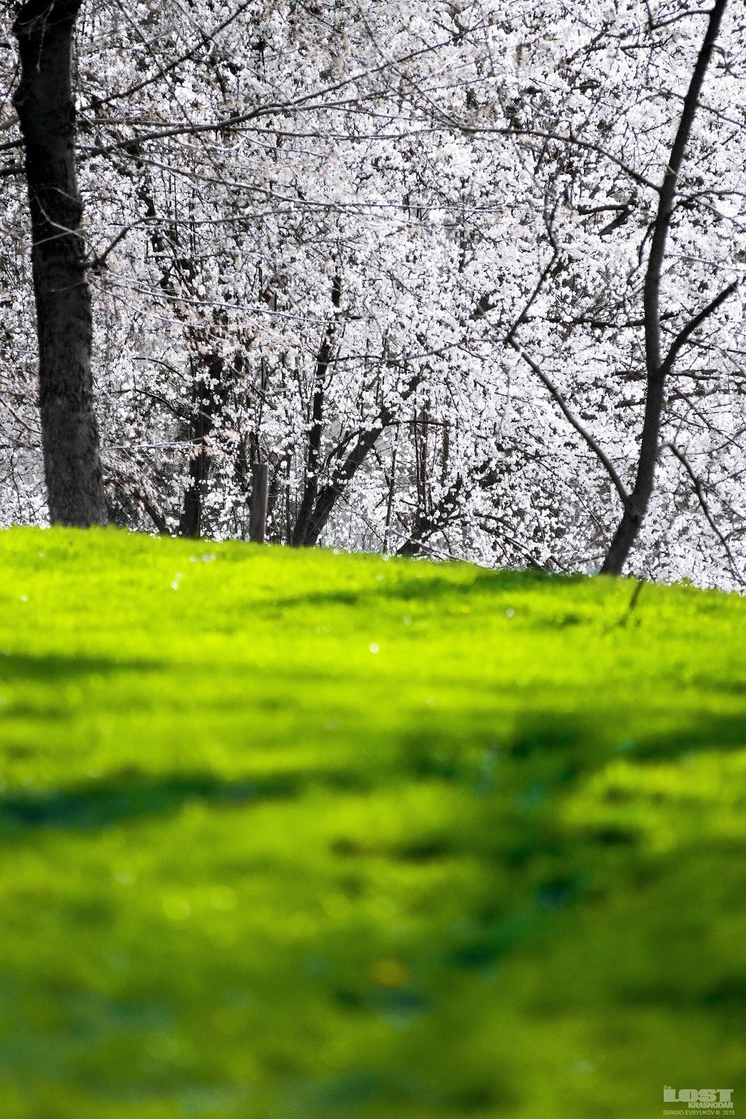 Зелёная опушка весной