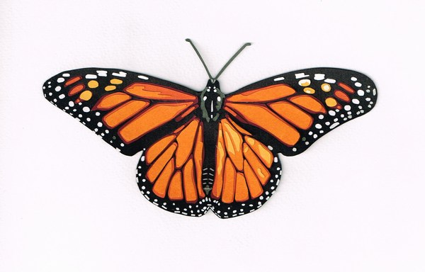 HD Butterfly Images for Desktop