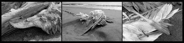 Death; Bones; Animals; Seagull; Hirtle's Beach