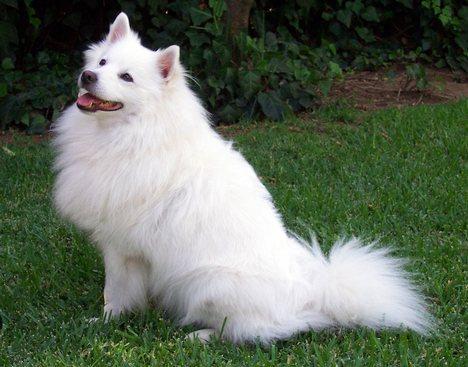 as 7 raças de cachorros mais caras do mundo blog ref