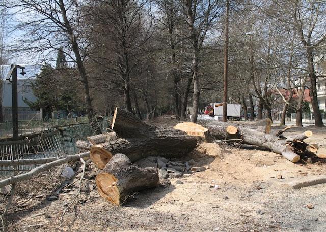 Αντικαθιστούνε δέντρα με τσιμέντο οι αναπλάσεις