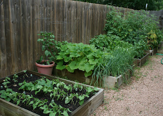 My Edible Yard Urban Homestead - urban gardening in Houston, Texas