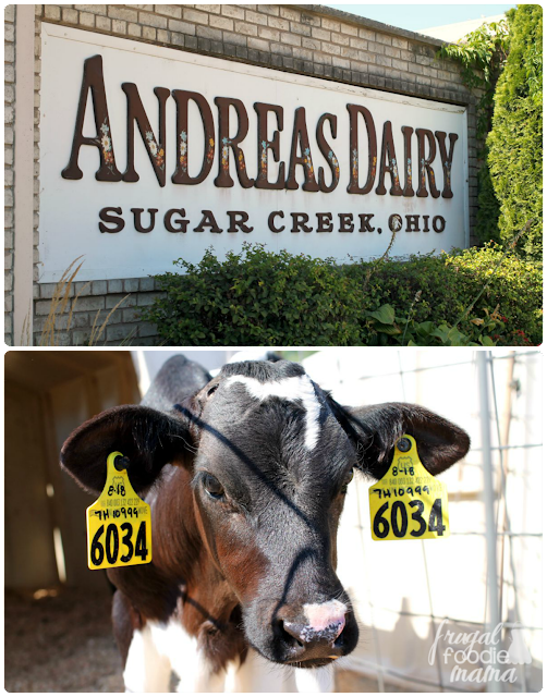 Andreas Dairy in Sugar Creek, Ohio is larger scale dairy farm with 1300 head of Holstein dairy cows.