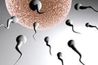 infertil-wanita