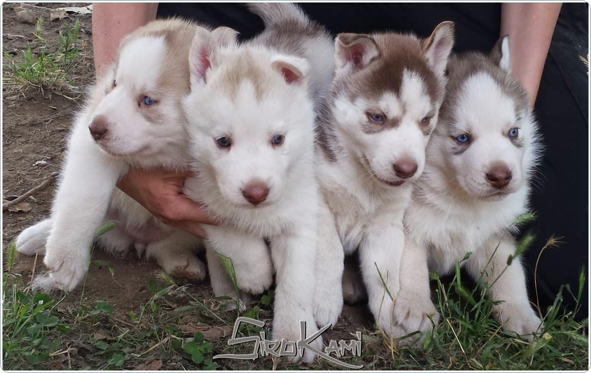 fotos cachorros grupo Del Sirokami