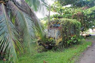 Vegetation over a track in cahuita costa rica