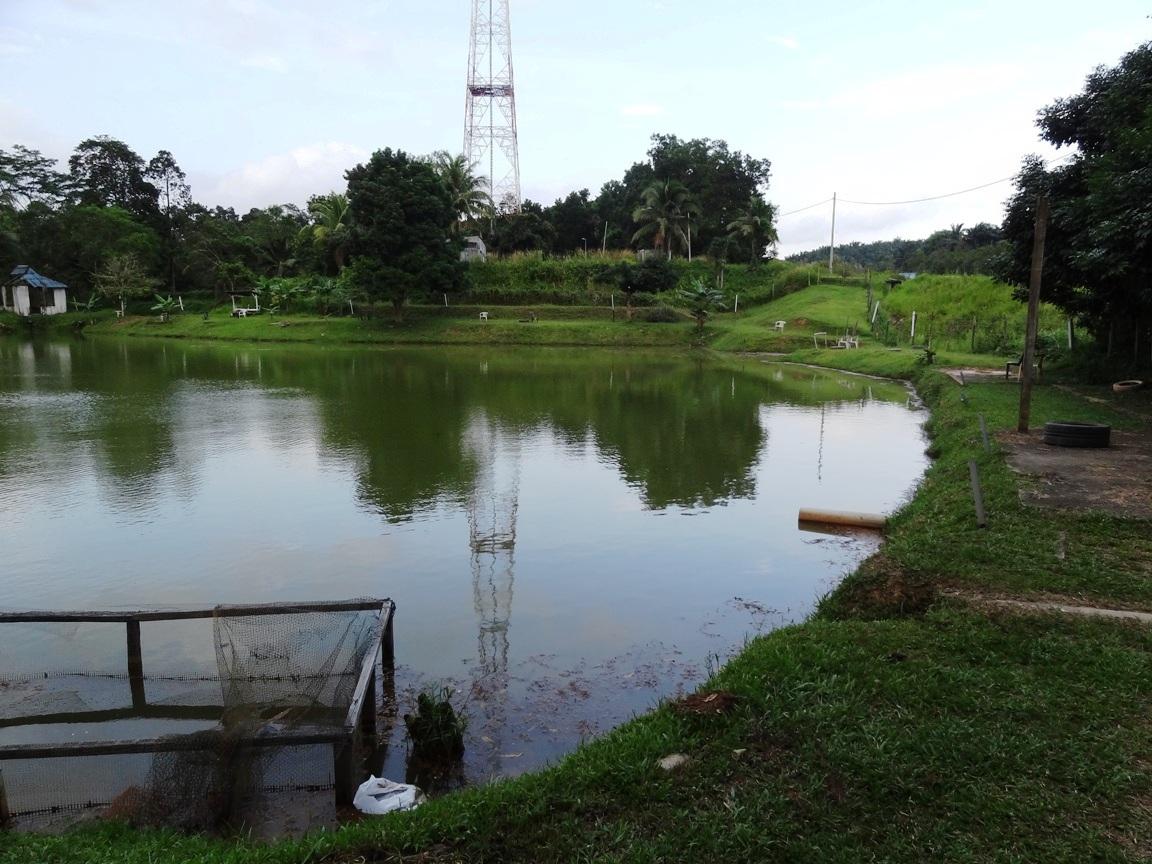J akuatik freshwater fishing pond fishing spots in johor for Freshwater pond fish