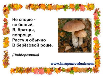 загадки о грибах подберезовиках для детей с ответами в картинках