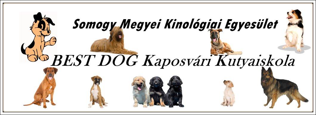 Somogy Megyei Kinológiai Egyesület és a BEST DOG Kaposvári Kutyaiskola honlapja