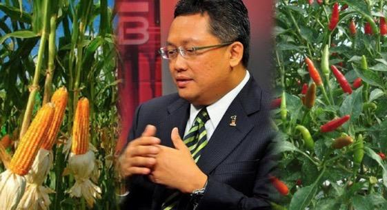 """""""Kalau Tak Tahan Hidup di Bandar, Boleh Pulang Kampung Tanam Cili dan Jagung""""– Menteri"""