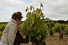 Enoturismo con niños en Rioja Alavesa