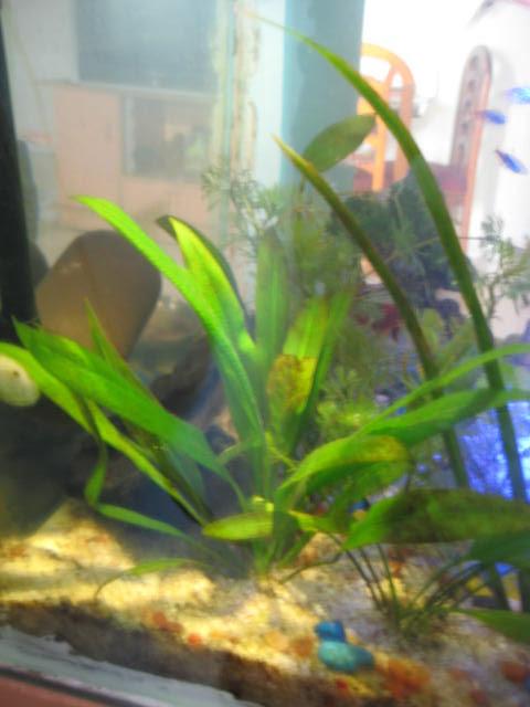 My fresh water aquarium natural planted tank walstad for Fish tank ice method