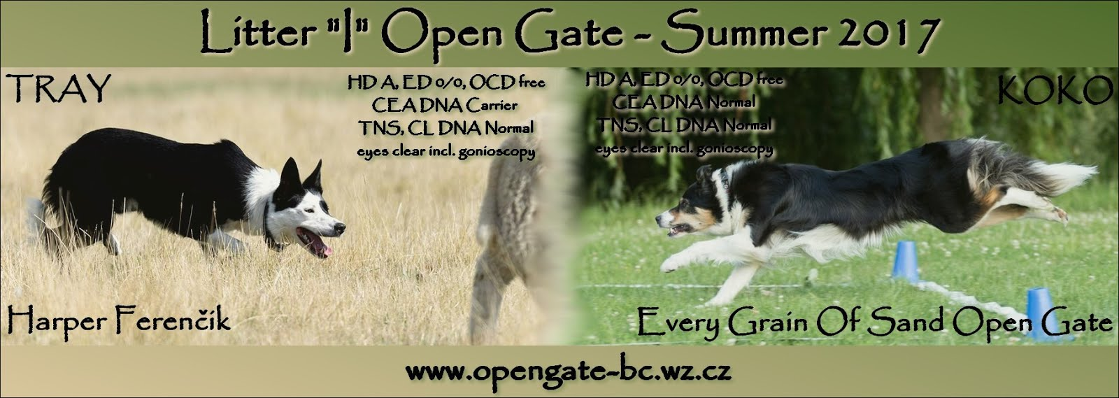 "Deníček vrhu ""I"" / Diary of ""I"" litter - Open Gate Border Collies"