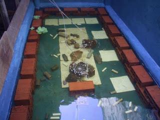 Persiapan Kolam Budidaya Lobster