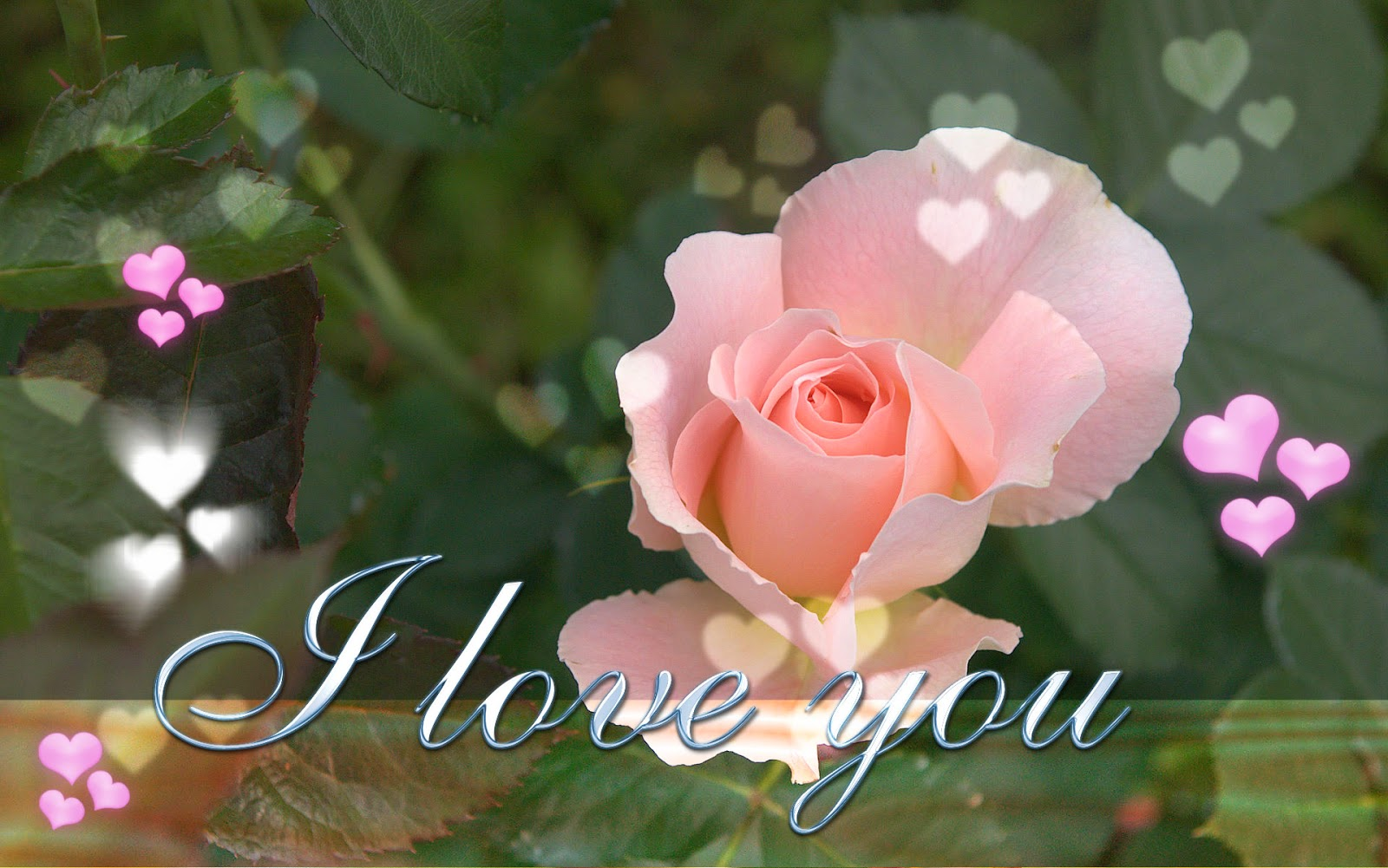 Wallpaper download i love you - I Love You Wishes Flowers Hd Wallpapers Images Pictures Photos Gallery Free Download
