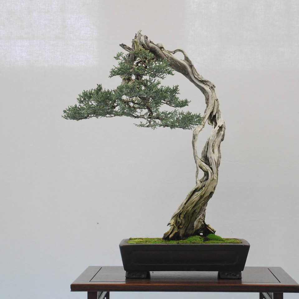 Big Little Trees