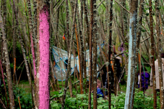 colourful painted trees in enchanted fairy forest at bluestone wales