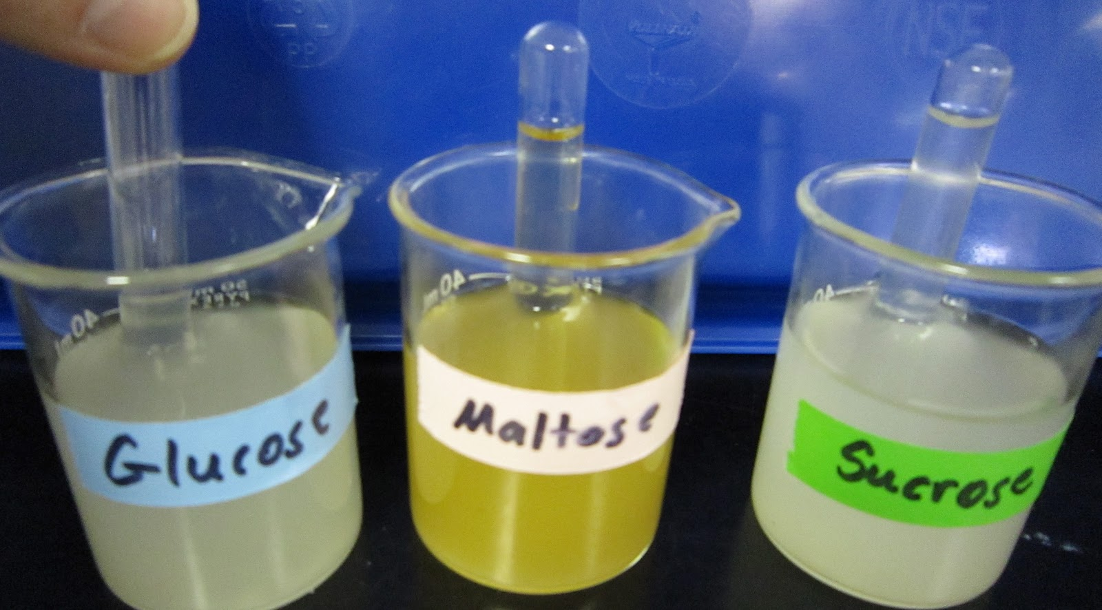 simple sugar lab Exercise 3 - qualitative analysis of biological molecules exercise 3 –qualitative analysis of biological molecules simple sugars.