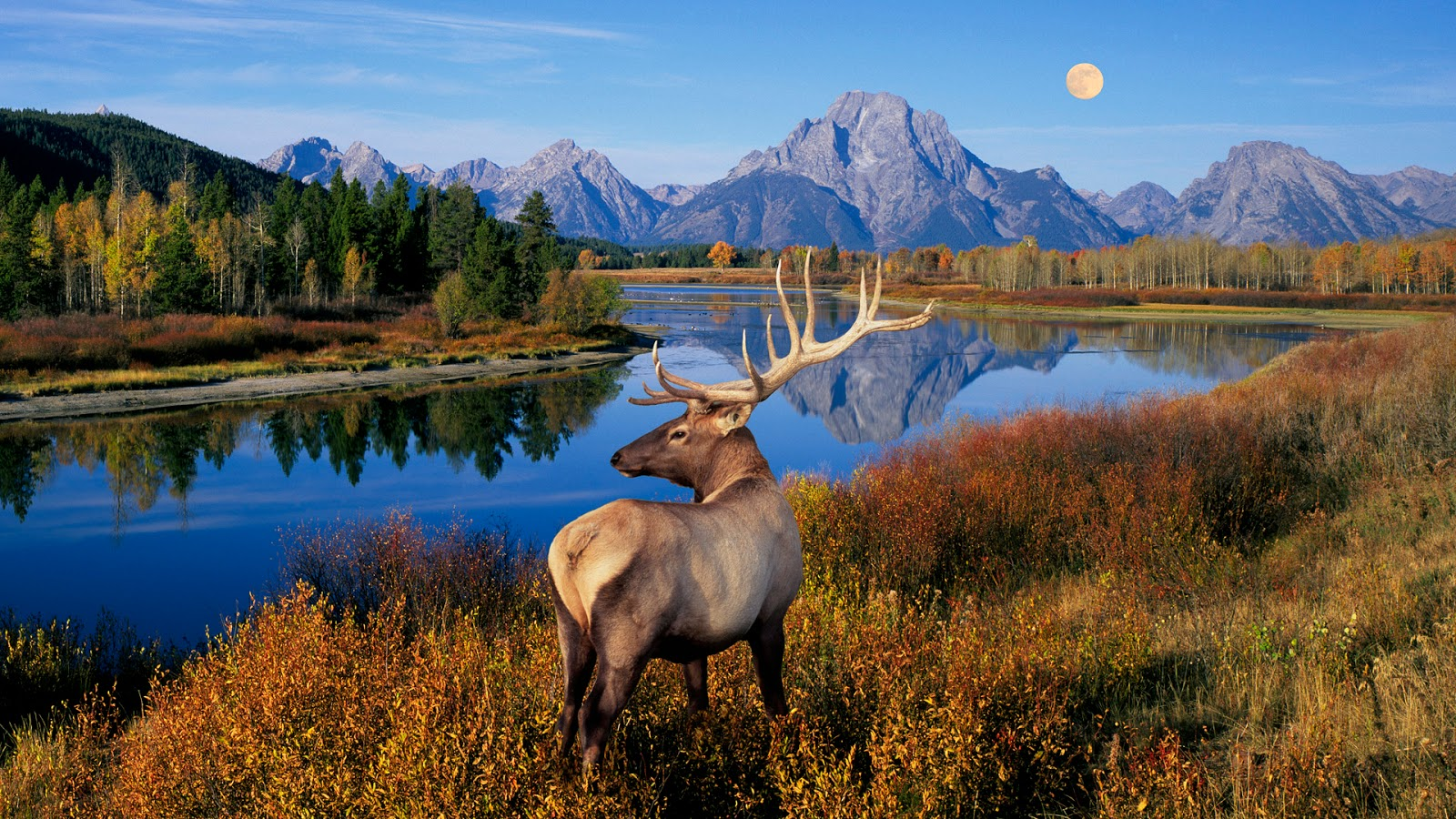 Nature world scenery hd wallpapers update for Deer scenery