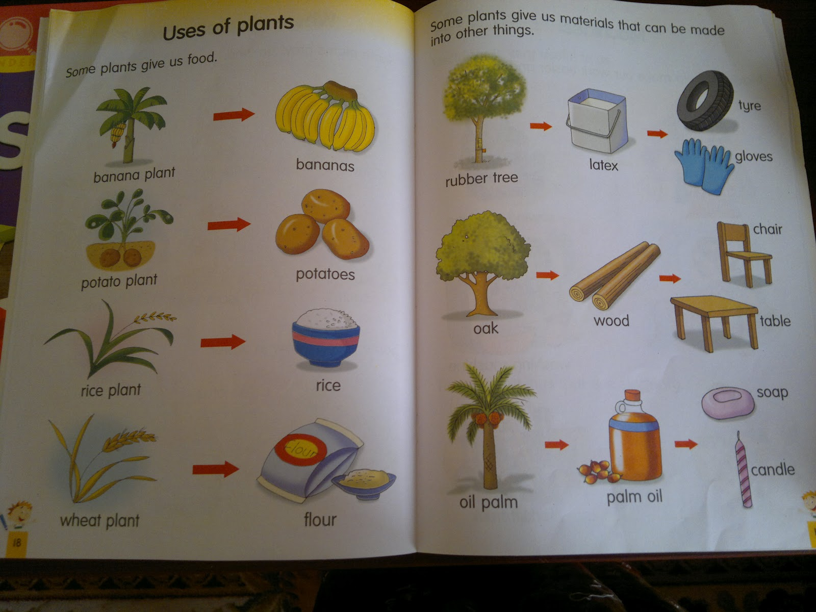 Umm Maimoonah's Journal: All about Plants!