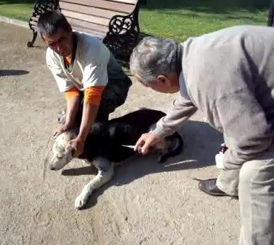 stray dogs ΑΠΑΝΘΡΩΠΟ ΑΠΑΡΑΔΕΚΤΟ ΒΙΝΤΕΟ: Κτήνη σε δημόσιο πάρκο δηλητηριάζουν on camera πάνω απο 10 σκυλιά   Δείτε τους ΑΛΗΤΕΣ!