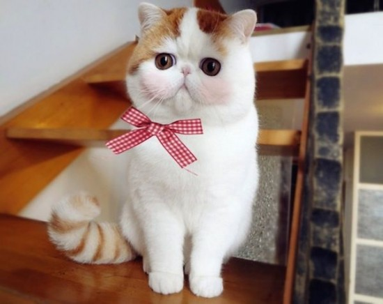 Foto Kucing Lucu Imut dan Menggemaskan 34