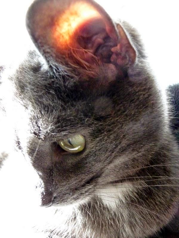 Pekka on harmaa kissa, osa 2