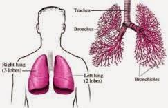 Pengobatan Alami Penyakit Flek Paru Paru