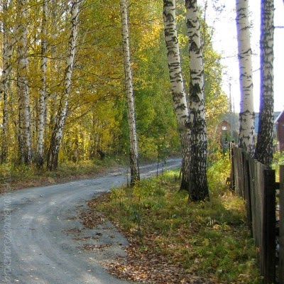 Who am I, that I Should be Sent? - picture of road and birch trees.