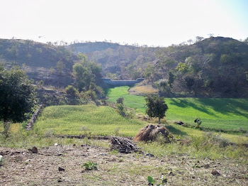 INDIA: 10 year old structure (similar to our project) prior it was unstable, now verdant farm land