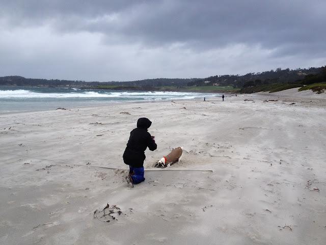 sarah kallison carmel beach