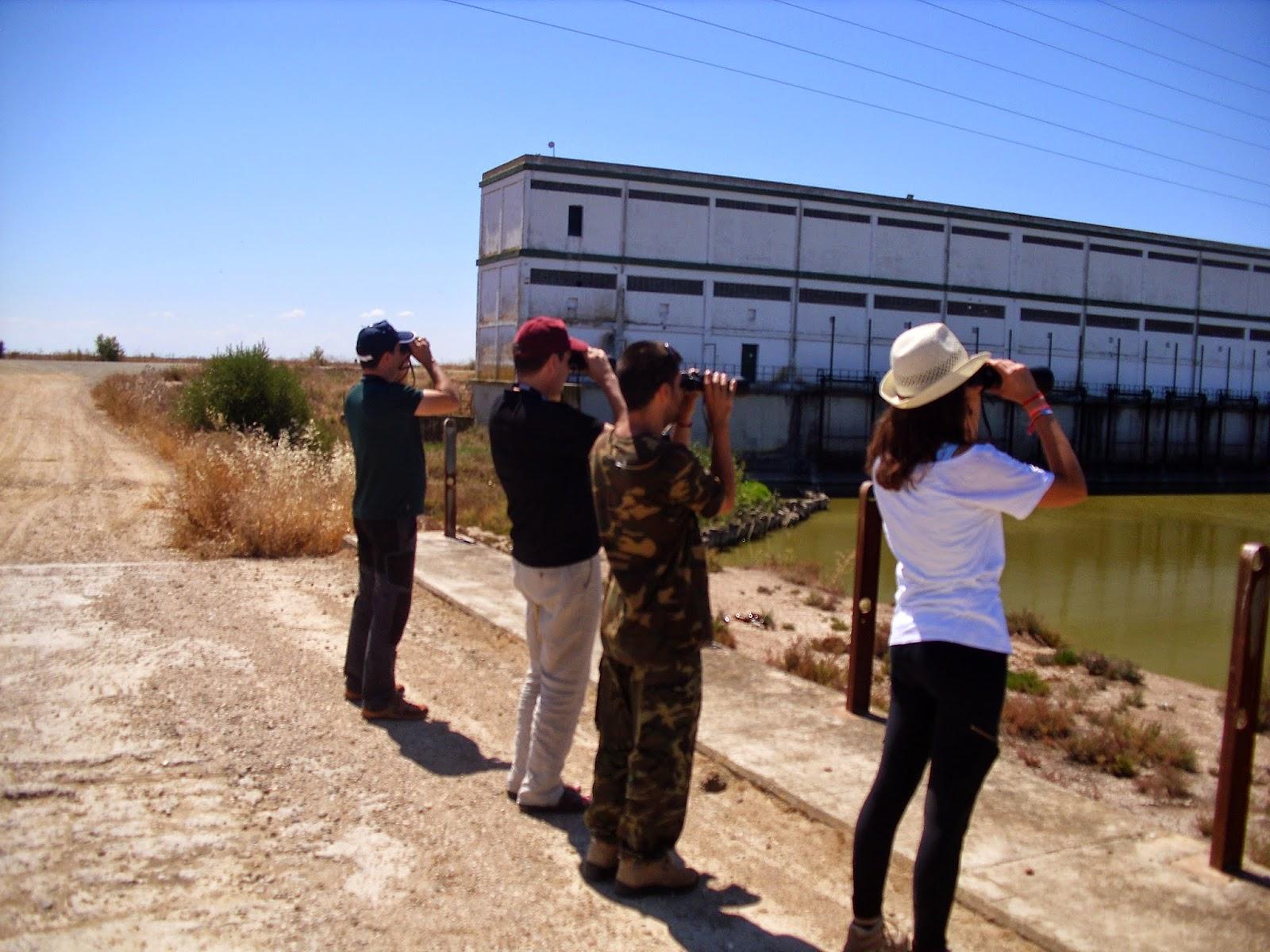 Excursión Grupo Local SEO-Sevilla SEO/BirdLife a las marismas de Doñana
