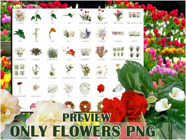 flowers png collcetion