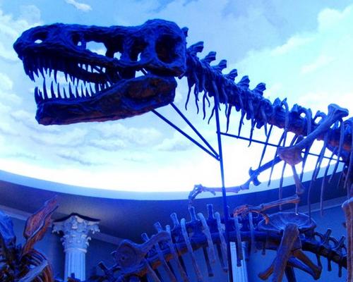 Aneka Fosil dan Diorama