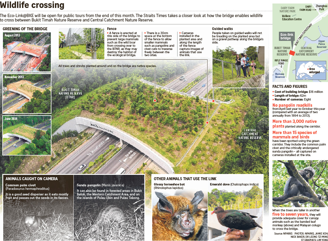 Wildlife crossing Eco-Link@BKE