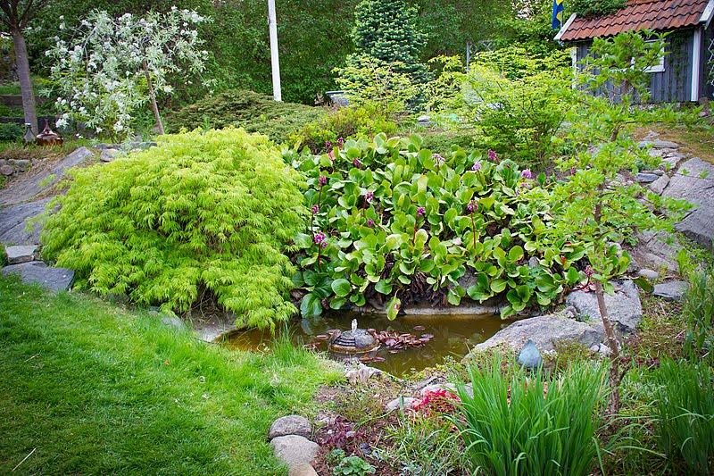Solrum Trädgård- att ta hand om en gammal trädgård: vatten i min ...