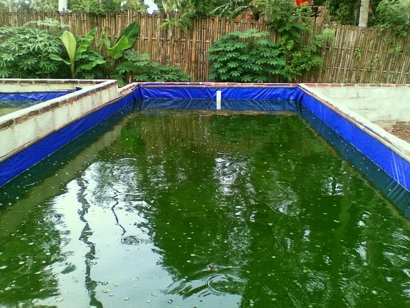 http://tipslele.blogspot.com/2015/01/pemberian-vaksinasi-pada-kolam-lele.html