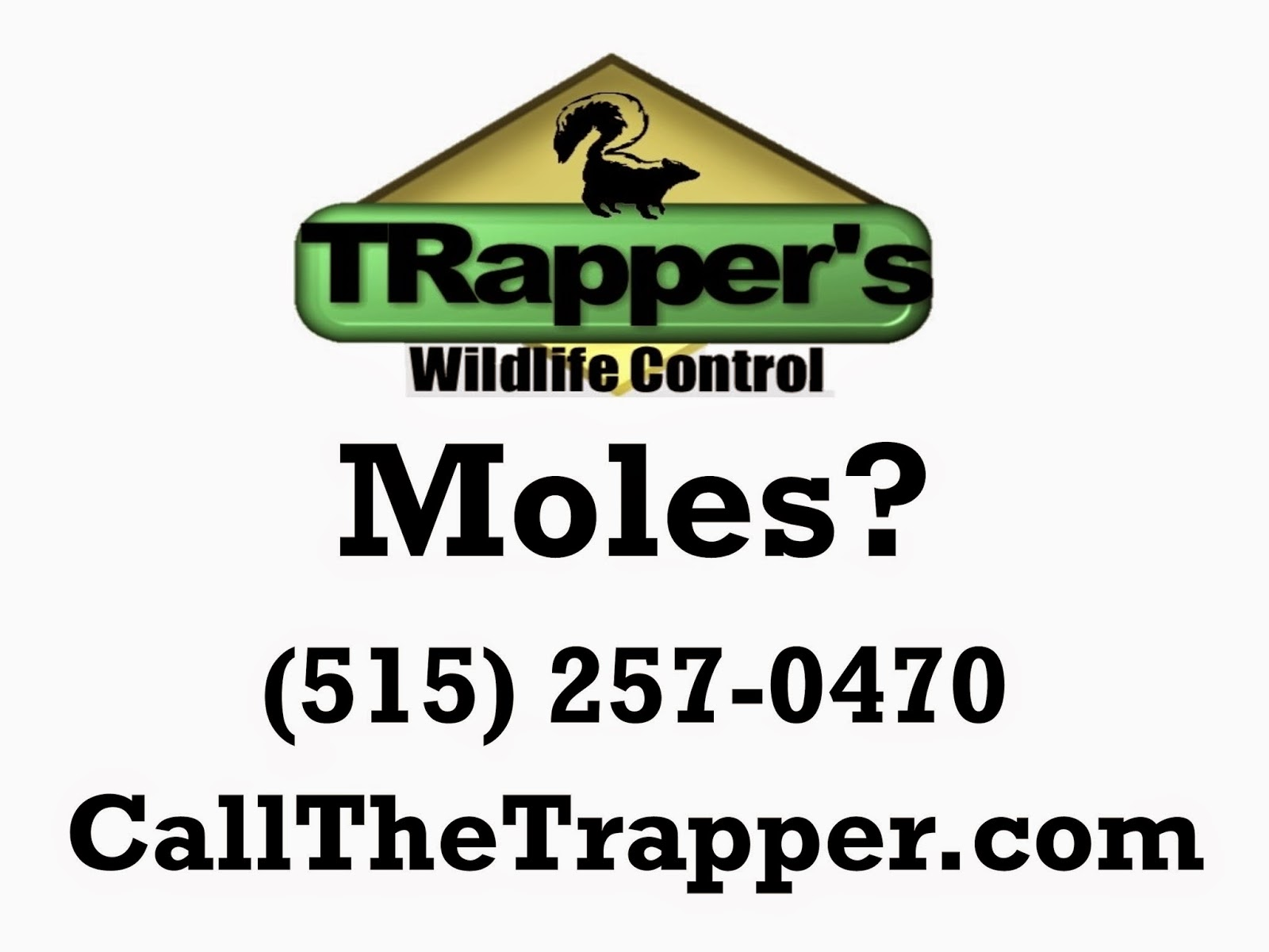 How to get rid of ground moles - Get Rid Of The Grubs And Get Rid Of The Moles Right Nope Not Right