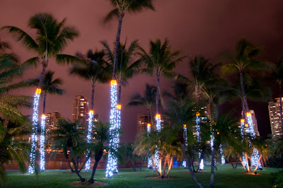 Christmas lights on palm trees in Miami, Florida