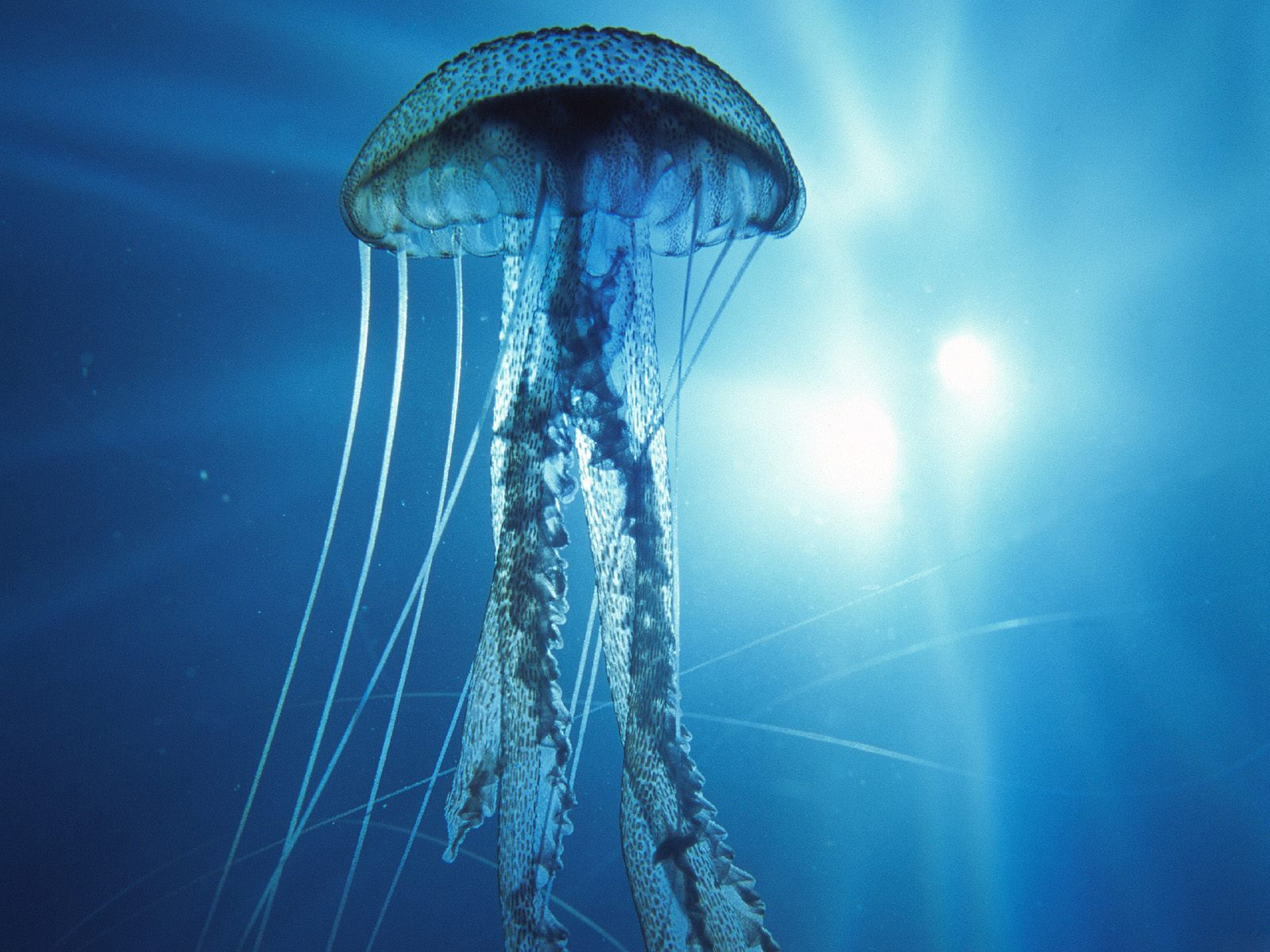 http://1.bp.blogspot.com/-VQjUTh10peI/TkrRpzxKK0I/AAAAAAAALko/EXywg-viMYM/s1600/Underwater+Wallpapers+%252822%2529.jpg