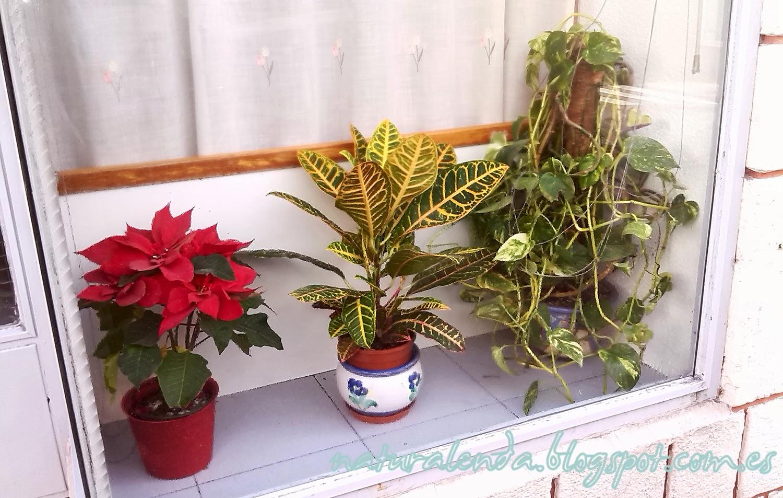 plantas en una tienda