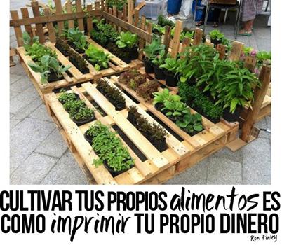 Urban farmers punto com dicen los que saben for Como cultivar hortalizas