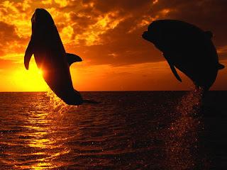 delfiny15