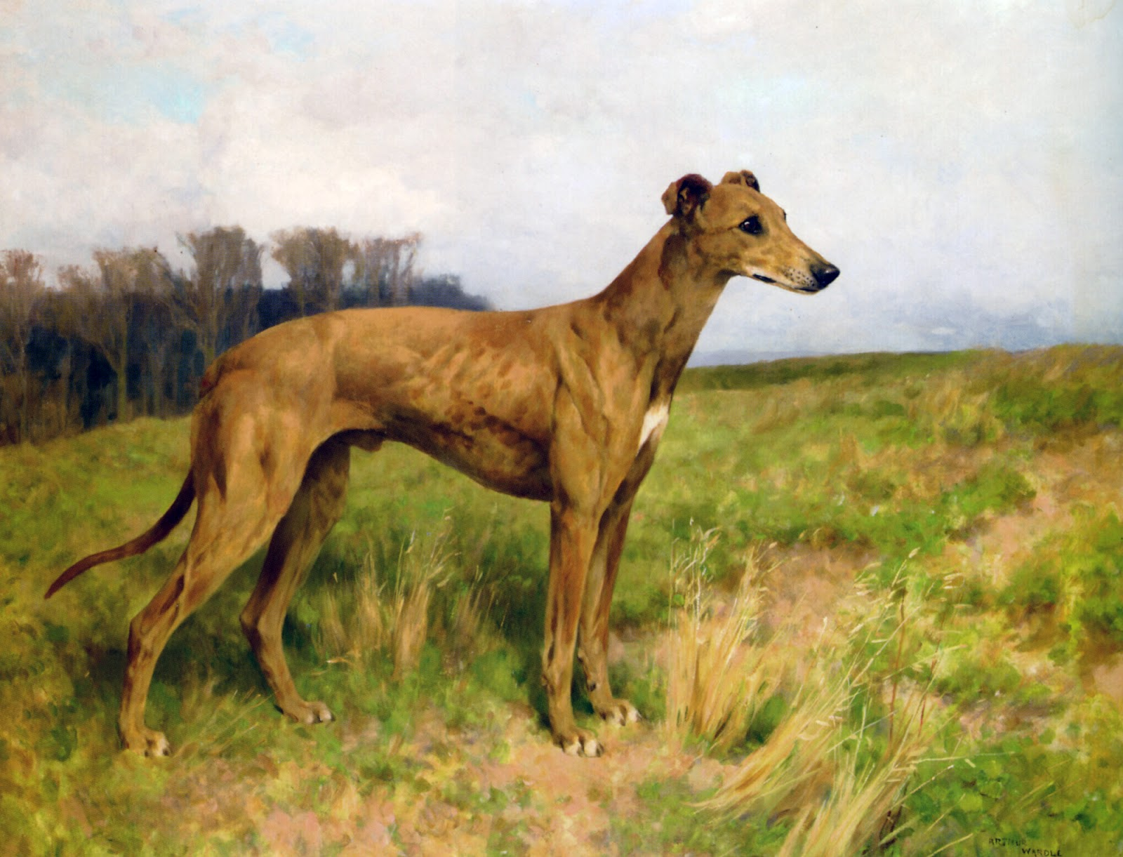 Enun D -> C Arthur+Wardle+-+Champion+Greyhound+Dee+Flint