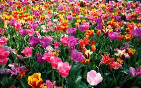 Festa primavera