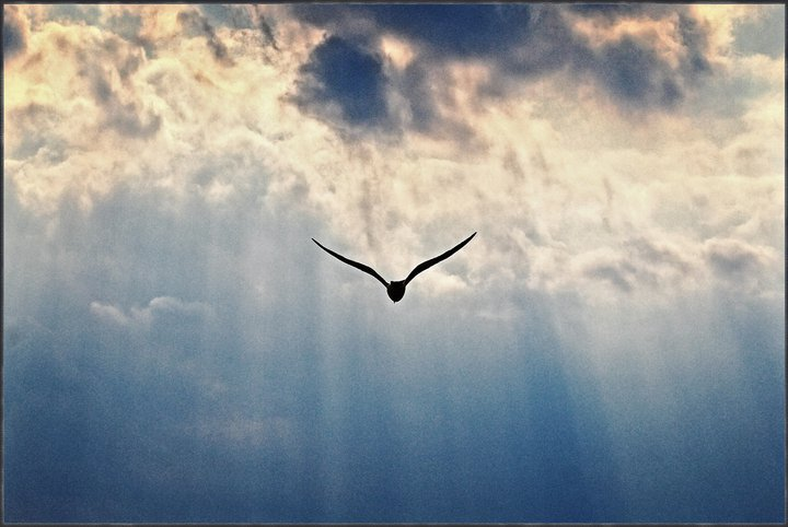 Bioregionalismo treia il verbo degli uccelli il cuore for Posso ottenere un mutuo solo sulla terra