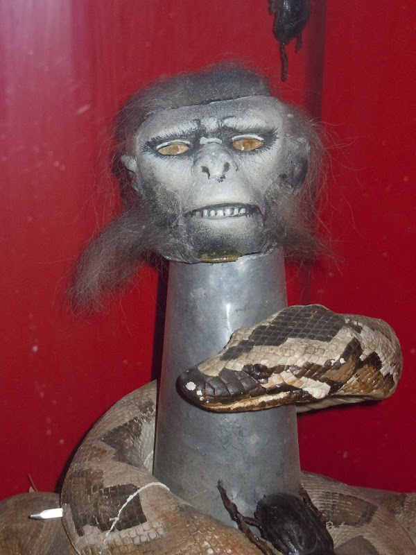 Indiana Jones 2 chilled monkey brains prop