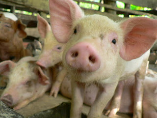Farm to table: Does PorkCares.org really care?